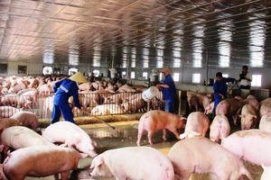 Quảng Nam: Khẩn trương triển khai các biện pháp ngăn chặn nguy cơ xâm nhiễm bệnh dịch tả lợn Châu Phi