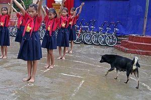 Ninh Bình: 12 học sinh tiểu học bị chó cắn trong trường