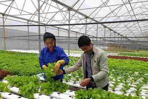 Lâm Đồng - Lấy khoa học công nghệ tạo đột phá trong sản xuất, tiêu thụ nông sản