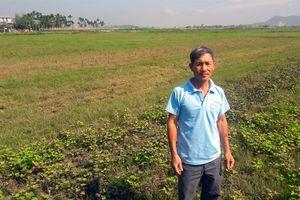 Ruộng đồng kêu cứu vì không có nước canh tác