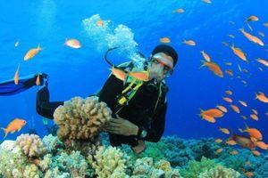 Nghiên cứu chủng vi nấm biển để tiến tới chiết xuất hoạt chất kháng viêm, kháng khuẩn