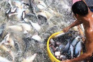 BẢN TIN TÀI CHÍNH - KINH DOANH: Nợ xấu ngân hàng giảm mạnh, xuất khẩu cá tra có thể đạt 2 tỷ USD