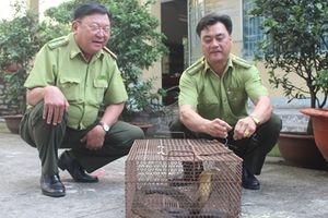 Phát hiện cá thể rắn Hổ chúa quý hiếm tại Đồng Nai