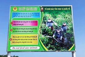 Khuyến cáo không cho khỉ, động vật hoang dã ăn khi tham quan bán đảo Sơn Trà