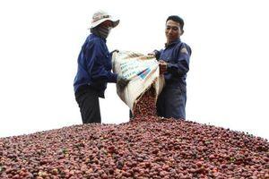 Cà phê vẫn là mặt hàng xuất khẩu số 1 của Việt Nam vào Algeria