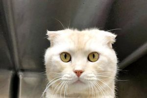 Cố tình bỏ rơi một con mèo, người đàn ông bị phạt hơn 45 triệu đồng