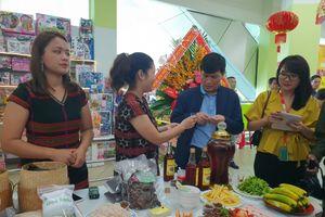Thừa Thiên-Huế: Hơn 10 tấn chuối rừng về siêu thị mỗi tháng