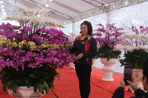Lan Hồ Điệp đón Tết giá chục triệu vẫn 'hút khách'