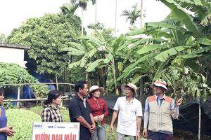 Vườn rau canh tác theo phương pháp tự nhiên ở Quảng Trị