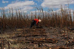 Đắk Lắk: Hơn 100ha mía sắp thu hoạch cháy rụi, nhiều hộ dân mất tết
