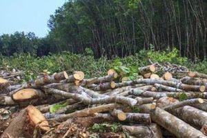Bắc Kạn: Tăng cường công tác quản lý, bảo vệ rừng trong mùa hanh khô