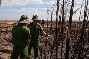 Đắk Lắk: Hơn 100 ha mía bị thiêu trụi, công an vào cuộc điều tra