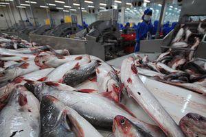 Cá tra Việt Nam chiếm 91% thị phần tại Mỹ