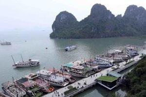 Đình chỉ hoạt động 2 tàu du lịch do vi phạm trên Vịnh Hạ Long