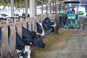 TH sở hữu trên 1.200 con bò sữa mang gen A2A2