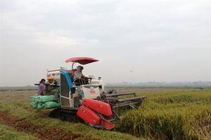 Nam Định: Phấn đấu năng suất lúa đạt 68 tạ/ha