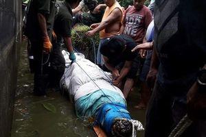 Image result for Cá sấu cắn xé nữ khoa học gia Indonesia