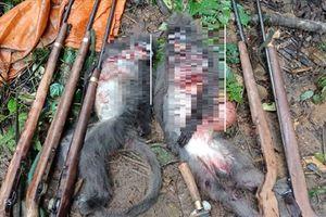 Điều tra nhóm thợ săn bắn chết hai cá thể voọc xám