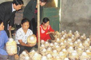 Thứ trưởng Bộ NNPTNT Trần Thanh Nam: Đổi mới việc đào tạo nông dân