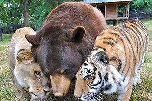 Chùm ảnh ngọt ngào của những cặp đôi thú cưng lớn lên cùng nhau