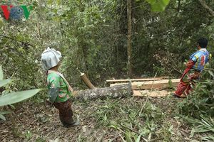 Vụ phá rừng Nà Pen: Xác định danh tính một đối tượng