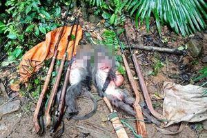 Nghệ An: Bắt nhóm thợ săn giết voọc xám quý hiếm