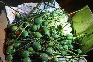 Ngụy trang 9 kg quả thuốc phiện tươi dưới giò phong lan