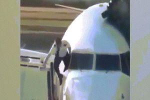 Tức cười cảnh phi công trèo qua cửa sổ máy bay vào buồng lái khi quên chìa khóa
