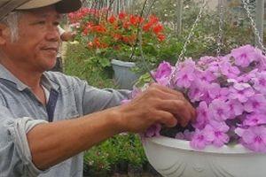 Ninh Binh: Trồng hoa đẹp bán Tết, lão nông kiếm hàng trăm triệu