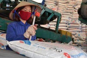 Nhập siêu hàng tỉ USD phân bón, thuốc trừ sâu