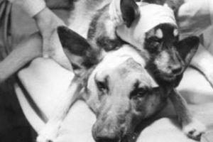 Lật lại thí nghiệm kỳ dị ghép đầu chó của nhà khoa học Liên Xô