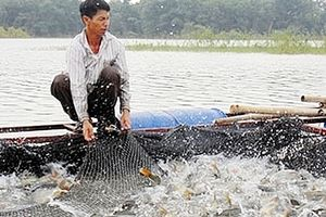 Hà Nội triển khai công tác phòng, chống dịch bệnh động vật thủy sản