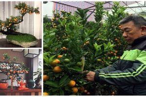 Tết Kỷ Hợi 2019: Nghệ nhân làng Tứ Liên tiết lộ kỹ nghệ trồng và chăm sóc quất bonsai