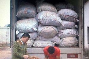 Vận chuyển trái phép trên 7 tấn củ ba kích, bị phạt 70 triệu đồng