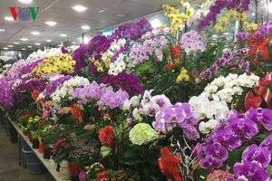 Nhiều làng hoa ở TP HCM đang tất bật vào vụ Tết