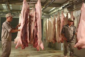 Vẫn khó kiểm soát hoạt động giết mổ, vận chuyển gia súc, gia cầm