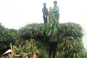 TH chi trả nông dân trên 160 tỷ đồng