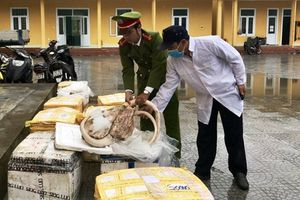 Huế: Bắt giữ hơn 7 tạ thịt động vật hôi thối trên đường vận chuyển