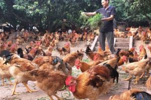 Xây dựng thương hiệu cho nông sản Thủ đô: 'Đích' không còn xa