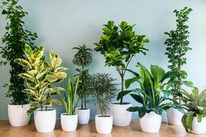 Cách chọn cây trồng trong nhà mang lại tài lộc cho cả gia đình