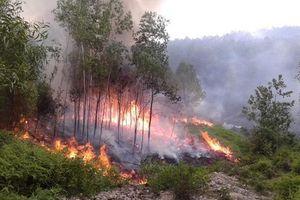 Nghệ An: Lập đường dây nóng phòng cháy, chữa cháy rừng