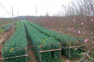 Nét đẹp mùa xuân những tháng giáp tết ở vườn Nhật Tân