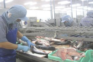 Tăng sản lượng để nâng sức cạnh tranh cho cá tra
