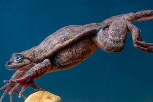 Chú ếch cô đơn 10 năm cuối cùng đã có bạn tình
