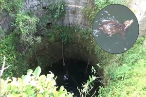 Chạy trốn thợ săn, hươu sao ngã 'sấp mặt' xuống giếng sâu 9 m