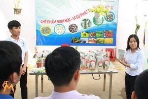 Sản xuất chế phẩm vi sinh từ phân chim cút