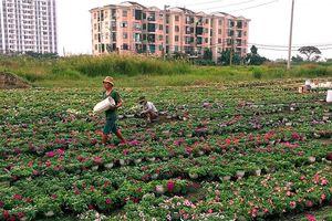 Làng hoa lớn nhất Sài Gòn tất bật vào mùa Tết