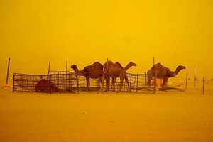 Ngoạn mục cảnh bão cát nhuộm vàng thủ đô Ai Cập