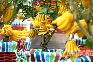 Vì sao người Việt sẵn sàng chi bạc triệu cho thú chơi Tết 'độc' bằng cây bonsai?
