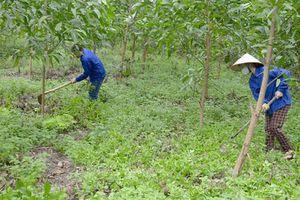 Hà Nội trồng rừng năm 2019 xong trước ngày 30/3